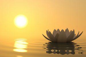 Mindfulnesstraining Rotterdam (MBCT)